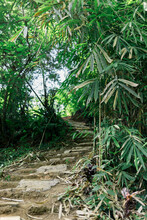 Pathway In Tropical Rainforest...