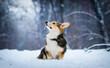 corgi dog in the snow in winter