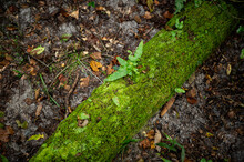 Green Tree Leaf On Log Growing Growth In Moss Covered Trees Logs Amid Fall Leaves On The Forest Woods Floor In The Woodlands Dark Photography Park Public Rural Wetlands HD
