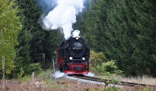 Fototapeta Harzer Schmalspurbahn im Fichtenwald  obraz na płótnie