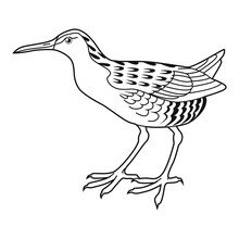 Sandpiper Vector Illustration For Your Design. Hand Drawing, Isolated On White. For Coloring Books, Pages.