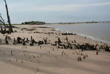 Northeast Florida Beach Erosion And Stubble