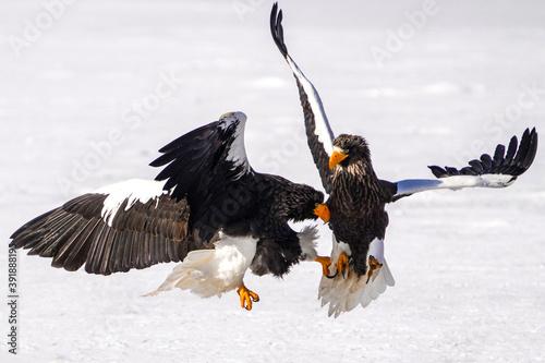 オオワシの戦い