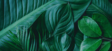 Green Background Concepts.Trop...