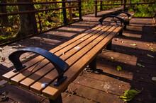 秋の遊歩道 星置緑地