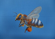 Detail Of An Artistically Painted Honey Bee With Pollen On Its Legs, Painting On A House Wall, Copy Space