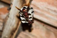 Stinging Wasps That Make A Nes...