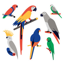 Vector Illustration Icon Set Of Parrots. Eclectus Parrot, Scarlet Macaw, African Grey Parrot, Budgerigar, Sulfur Crested Cockatoo, Ring Necked Parakeet.