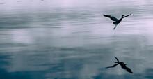 The Bird Flies Above The Surfa...