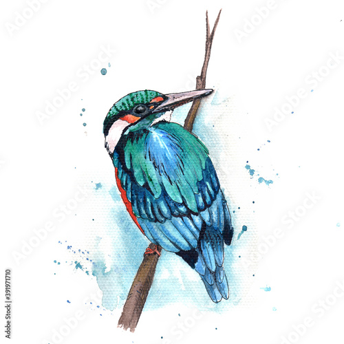 Canvas-taulu Watercolor Bird Kingfisher Sitting on the Branch Hand Painted Wildlife