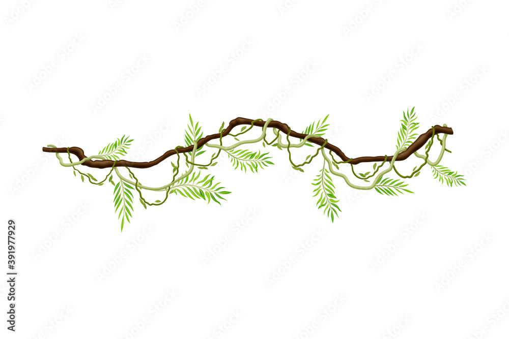 Fototapeta Liana as Long-stemmed Woody Vine Climbing and Tangled Around Tree Vector Illustration