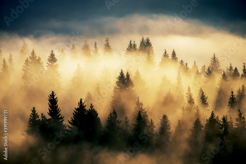 Fototapeta Foggy landscape with fir forest. Vintage style. Extravaganza of light among the majestic firs. obraz
