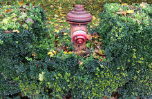 Fire Hydrant In Autumn Time
