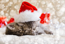 Cute Tabby Kittens Sleeping Together In Christmas Hat With Blur Snow Lights. Santa Claus Hat On Pretty Baby Cat. Christmas Cats. Home Pets In Costume At New Year Xmas.