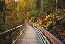 Wooden Path Between Colored Tr...