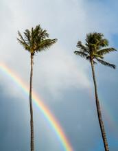 Palm Trees And Rainbow In Hawaii