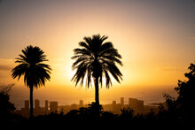 Sunset And Palm Trees Overlook...