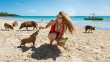Young Woman Feeding Lettuce To Piglet At Beach On Sunny Day