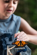 Young Boy Looking At A Monarch Butterfly Resting On A Deck Railing.