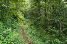 A Trail In A Dense Forrest In The Mountains Of Zacatlan