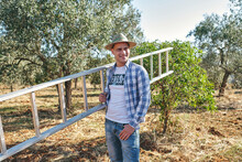 Farmer Carries The Ladder To Climb The Olive Trees