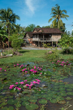Typical Rural House On Stilts With Water Lilies In Pond In Foreground, Cambodia.