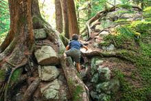Young Boy Climbing Up Tree Roo...