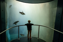 Young Child Watching Penguins ...