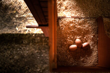 Fresh Eggs Inside A Nesting Box From A Chicken Coop