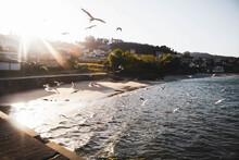 Seagulls Flying On The Beach A...