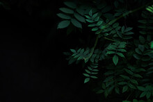 Dark Green Leaves With Blank S...
