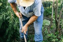 Farmer Working With A Rake Sur...