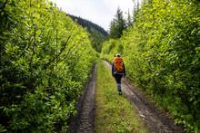 Traveler Walking Along Path Th...