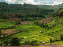 Rice Field In The Valley. Beauty Of Nature.