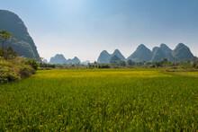 Rice Paddy And Limestone Mount...