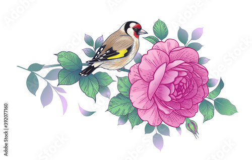 Obraz na plátně Hand Drawn Goldfinch Sitting on Rose Branch