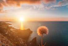 Dandelion Over Spring Sea Landscape With Sunset Sky And Volcanic Rocky Coastline. Calm Sea On A Background Of Rocky Shores. Perfect Place For Travel And Rest. Never-ending Beauty Of Nature. Copy Space