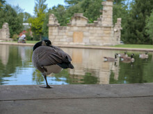 Goose Sleeping By Castle On Lake