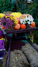 Wooden Cart With Pumpkins And Flowers.