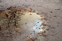 Puddle In Which The Cloudy Sky...