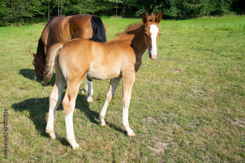 Papel de parede mare and foal