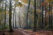 canvas print picture - Herbst im Buchenwald