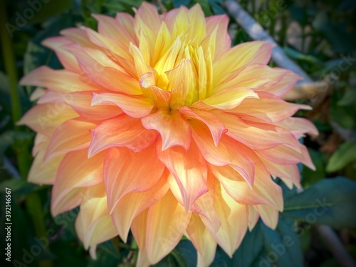 Fotografía orange flower in the garden