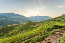 Terraced Rice Paddy Field Land...