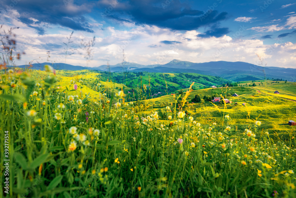 Fototapeta Dramatic morning view of Carpathians with Hoverla and Petros peaks on background. Splendid summer scene of mountain village Yasinya. Colorful landscape of Ukrainian countryside.