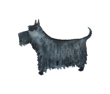 Watercolor Scottish Terrier