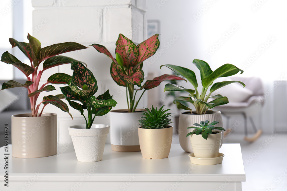 Fototapeta Collection of exotic houseplants with beautiful leaves indoors