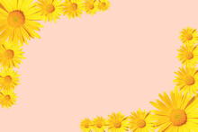 Yellow Daisy Flowers Corner Arrangement On Pink Background