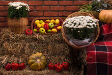 Autumn Decor With Natural Straw Bale, Pumpkins, Flowers And Old Wooden Barrels. Harvest And Garden Outdoor Decorations For Halloween, Thanksgiving, Autumn Season Still Life. Fall Styled Composition.