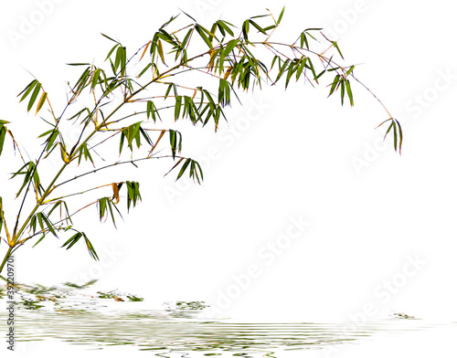 Tela bamboo